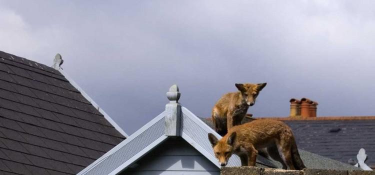 Urban Wildlife: Not your average neighbour
