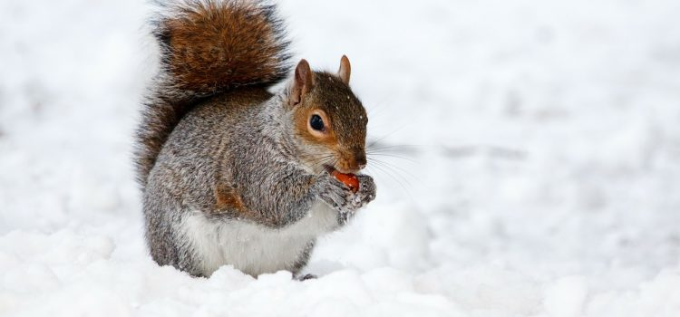 Keep Critters Out of Your Warm Home During the Winter
